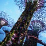 【シンガポール】ガーデンズ・バイ・ザ・ベイで近未来体験!
